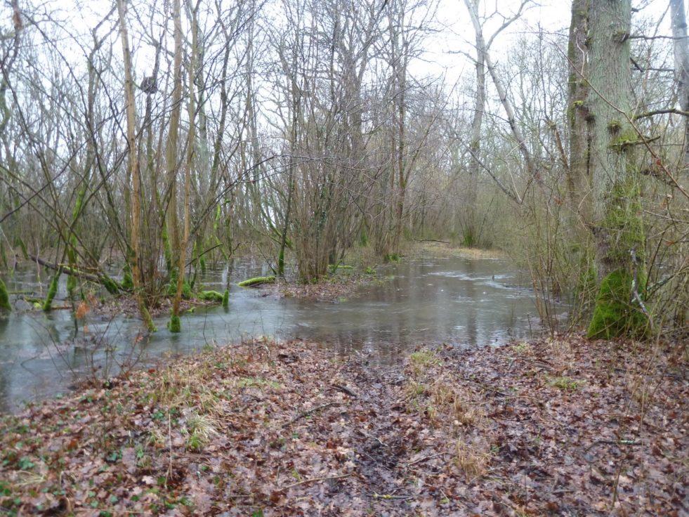 Forêt inondée