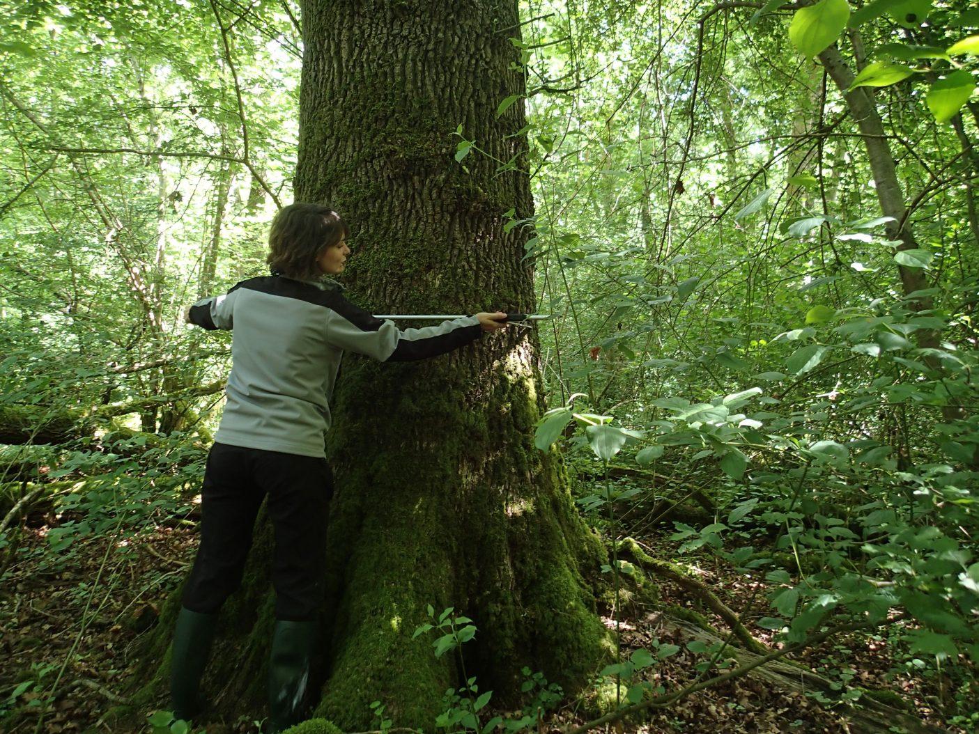 Suivi Forêt